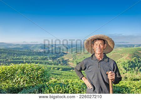 Since Early Morning Farmers Leave On A Tea Plantation...