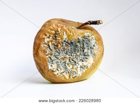 A Rotten Apple Covered With A Mold.