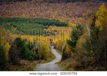 Dirt Road Snakes Through Colorful Woods In Northern Maine