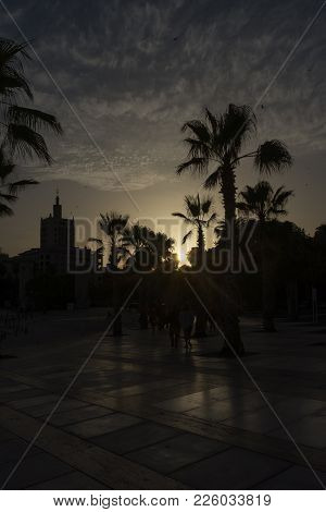 Golden Sun Sets Behind A Palm Grove At Malaga, Spain, Europe