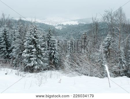 Early Morning Winter Mountain Landscape With Frosting Fir Trees And Ski Sport Bukovel Resort-village