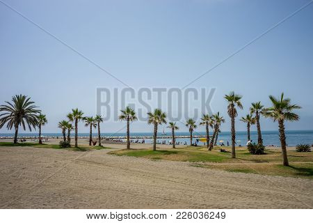A Collective Bunch Of Palm Trees At Malagueta Beach With The Ocean In The Background In Malaga, Spai