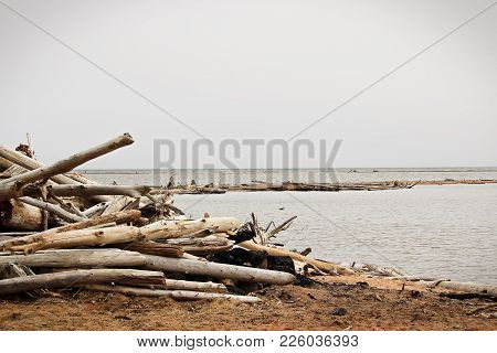 Piles Of Driftwood On The Shores Of A Foggy Lake.