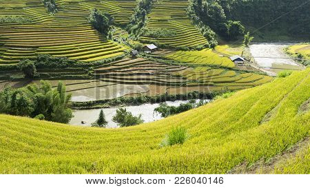 Yellow, Green, Travel, Nature, Landscape, Asian, Ethnicity, Rural, Field, Plant, Country, Valley, Mo