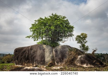Lonely Tree On Rocks. Concept Of Vitality And Strength