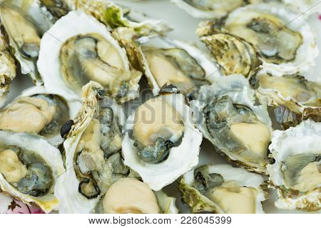 Opened Fresh Shucked Oysters Ready For Eating