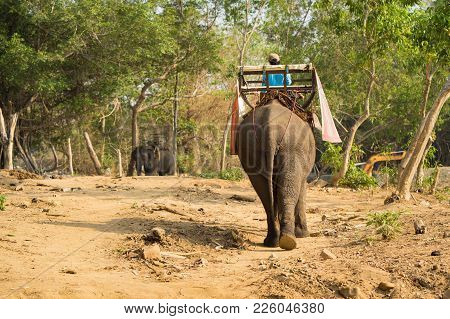 Tame Elephant In Tay Nguyen, Central Highlands Of Vietnam