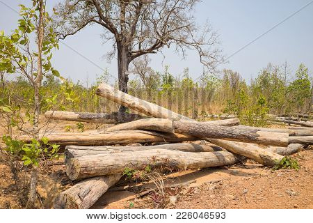 Pile Of Sawed Wood In Forest In Tay Nguyen, Central Highlands Of Vietnam