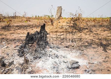 Burnt Stump On Hill In Tay Nguyen, Central Highlands Of Vietnam