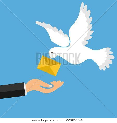 The Mail Pigeon Brings A Letter. Golub Brought The Letter Into The Man's Hand. The Concept Of Receiv