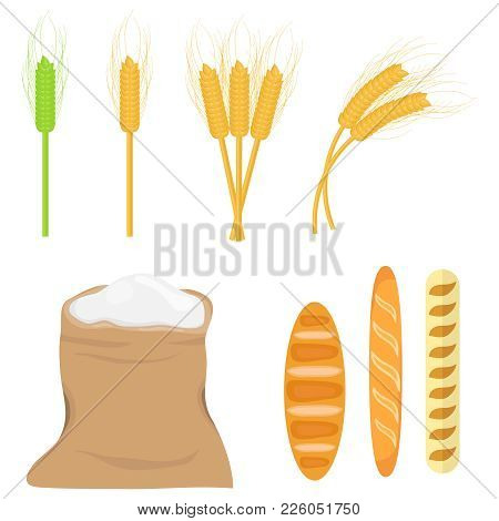 Spikes Of Wheat, Bag Of Flour. A Set Of Wheat Ears. Bakery Products. Flat Design, Vector Illustratio