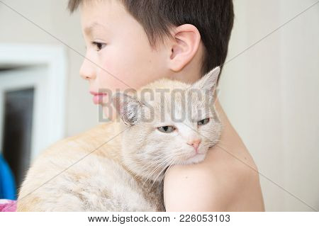Boy Embracing With Cat After Waking Up, Favorite Pet On Child Hands,interactions Between Children An