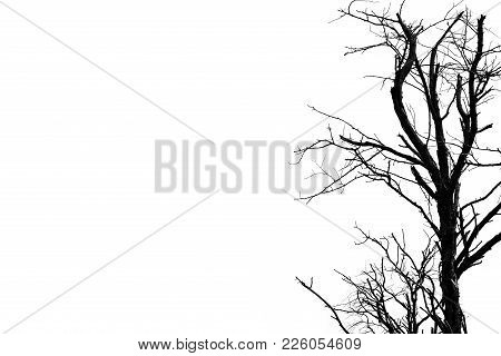 Silhouette Dead Tree Isolated On White Background For Scary Or Death With Copy Space For Text. For H