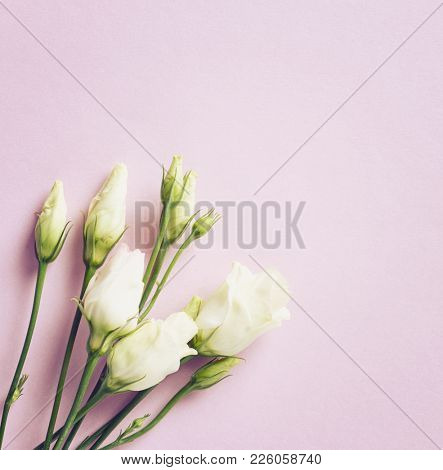 Prairie Gentian Flowers on pink paper background