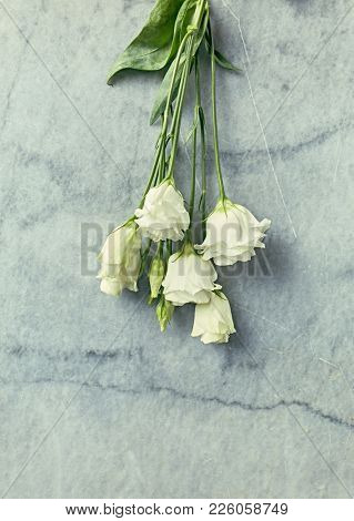 Prairie Gentian Flowers on rustic stone background