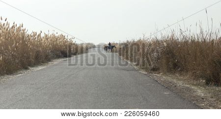 Asphalt Road In The Reeds . In The Park In Nature