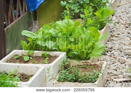 Vegetable Grown In Spongy Boxes At Home To Make Clean Vegetable, The Way To Avoid Eating Chemical In
