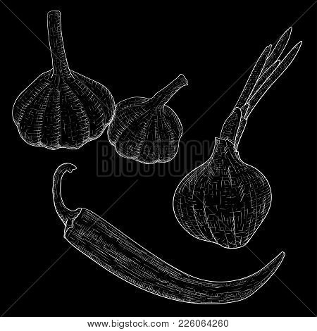 Vegetables Sketch. Onion, Garlic And Chili Pepper. Vector Illustration On Black Background