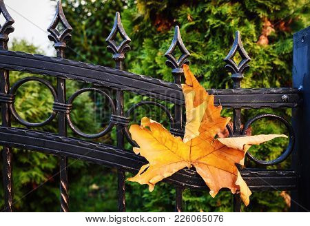 Wrought Iron Fence. Leaf On Iron Fence