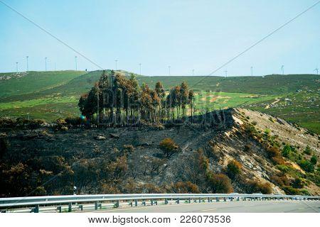 Burnt trees and grass after fire near asphalt highway, Spain