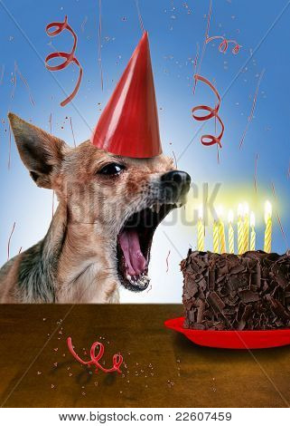 a chihuahua with a piece of cake