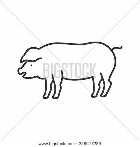 Pig Linear Icon. Livestock Farming. Agriculture. Thin Line Illustration. Contour Symbol. Vector Isol