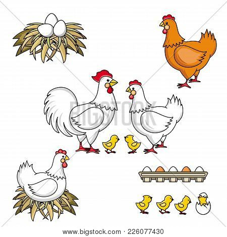 Set Of Rooster, Hen, Baby Chicken And Eggs, Hand-drawn, Sketch Style Vector Illustration Isolated On