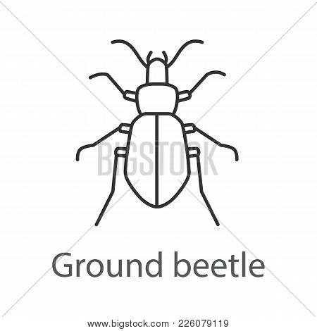 Ground Beetle Linear Icon. Bug. Thin Line Illustration. Contour Symbol. Vector Isolated Outline Draw