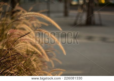 Grassland Of Tropical In Over Sunset Time Blurred Image.