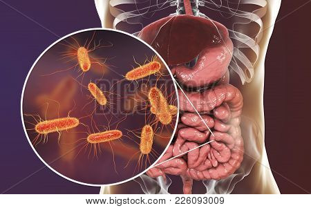 Intestinal Microbiome, 3d Illustration Showing Anatomy Of Human Digestive System And Enteric Bacteri