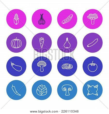 Vector Illustration Of 16 Food Icons Line Style. Editable Set Of Pea, Broccoli, Carrot And Other Ico