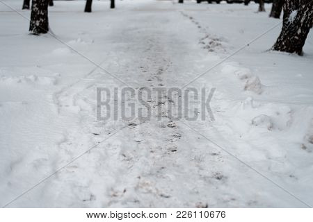 Footprints Of Pedestrians On The Crossing In Winter On Snow. A Lot Of Foot Prints On The Street In W