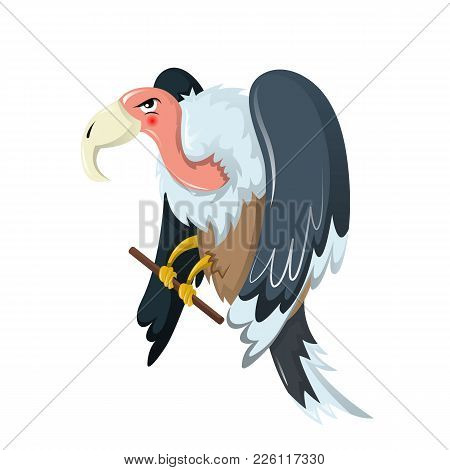 Funny Animals. Bird Of Prey Is Vulture, Family Hawks, With Large, Powerful Beak. Inhabitant Of Europ