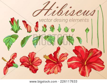 Red Hibiscus. Desing Elements Collection. Vector Illusnration.