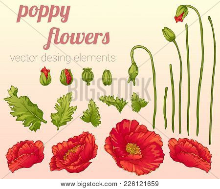 Vector Desing Elements Set. Cute Poppy Flowers