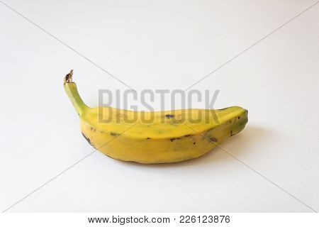 Bottom View Of A Fully Ripe Burro Banana, Orinoco, Bluggoe, Horse, Hog And Largo Banana, Isolated On
