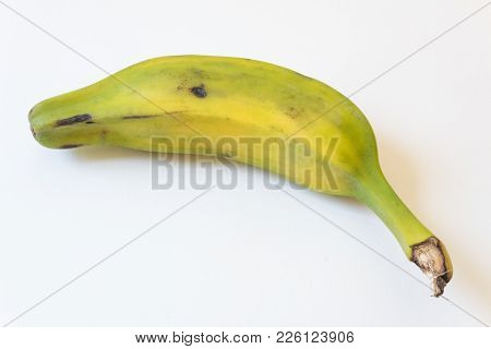 Overhead View Of Partially Ripe Burro Banana, Also Orinoco, Bluggoe, Horse, Hog Or Largo Banana, Iso