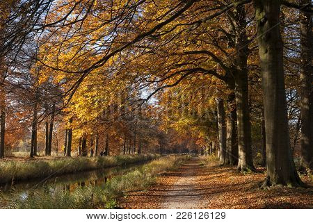 Gran Canal Near The Dutch Village Renswoude Surrounded By Autumn Colored Trees