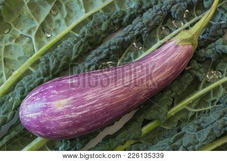 Thin Purple Dominican Eggplant On A Background Of Italian Lacinato Nero Di Toscana Heirloom Dinosaur