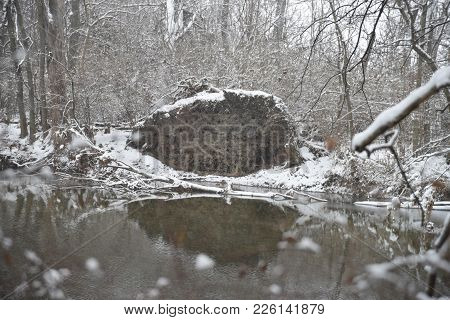 Uprooted Tree Felled Beside A River With Reflection In The Water In Winter, Snow Covered In The Wood