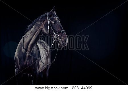 Studio Shot Of A Horse On Black Background