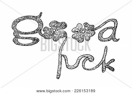 Symbols For Fortune And Luck, Illustration Hand Drawn Sketch Of Fresh Three Leaf Clover Plants Or Sh
