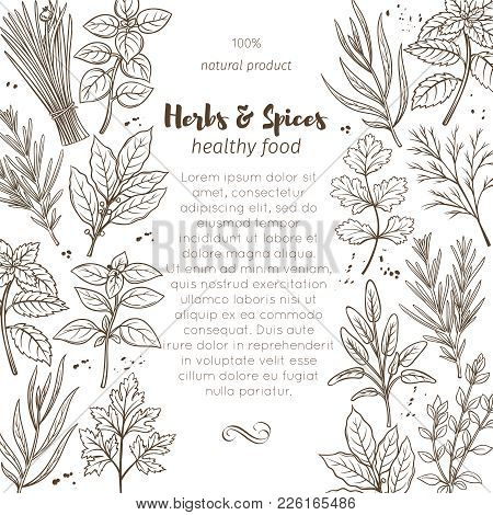Page Design Template With Hand Drawn Sketch Herbs And Spices For Farmers Market Menu Design. Vector