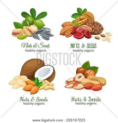 Banners With Nuts And Seeds. Cola Nut, Pumpkin Seed, Peanut And Sunflower Seeds. Pistachio, Cashew,