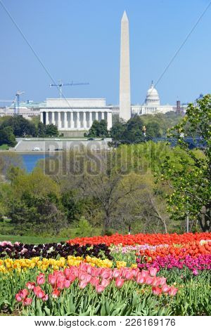 Washington DC skyline with monuments including Lincoln Memorial, Washington Monument and the Capitol in spring with tulips foreground