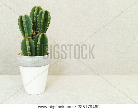 Artificial Cactus In White Pot. Faux Plant. Contemporary Home Decor.