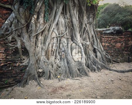 Ancient Remains Of Thai Buddha Head In The Banyan Tree