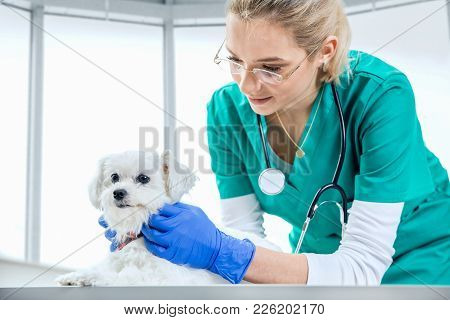 Female Vet Examines The Fur Of A Dog