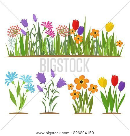 Early Spring Forest And Garden Flowers Isolated On White Vector Set. Illustration Of Nature Flower S