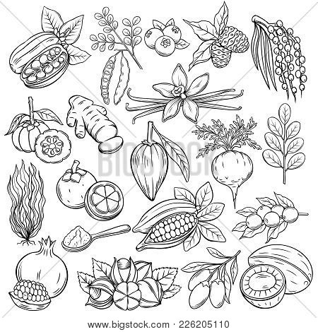 Set Hand Drawn Superfood Icons. Vector Sketch Healthy Detox Natural Product Of Camu Camu, Garcinia C